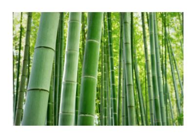 Proprietà legno di bamboo
